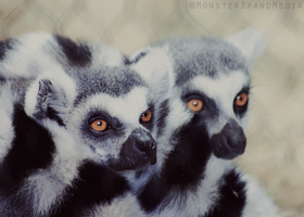 Princes of Madagascar by MonsterBrand