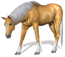 Horse 2 PNG by Variety-Stock