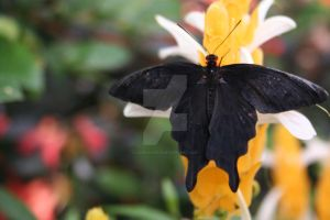 Papillons XXII by Lord-Rhesus