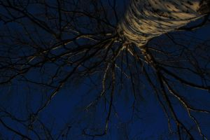 blue tree by FreedomeSoul88