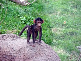 Baby Olive Baboon by asaph70