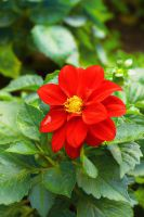 red flower by jagerion