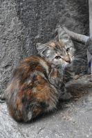 Tawny Cat by crystalleung7