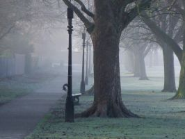 Harrogate, Stray II by d3lf