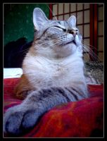 Casper, King of Cats by Cola92