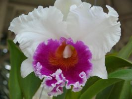 My Orchid5 by Otoff