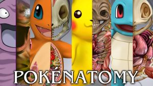 Pokenatomy Banner by Christopher-Stoll