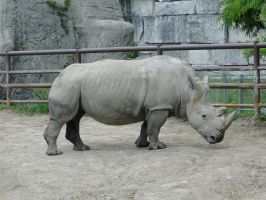 Rhino Pose by stillestilo