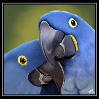 February---Hyacinth Macaw by amydrewthat