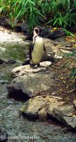 Relaxed Penguin by EuphoricPhotographs