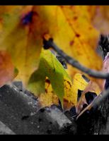 Looking through fall - 3 by paintedfingers