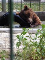 Bear to the bath 2 by linde-mona