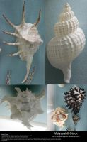 Shell Stock 4 by Melyssah6-Stock