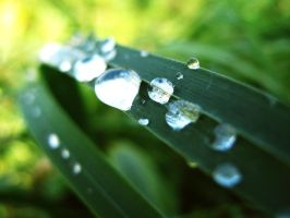 Raindrops 2 by thevioletglamour
