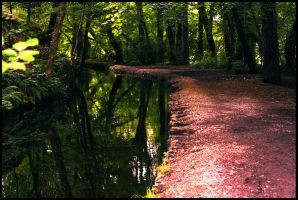 Canal Path by Veduta0