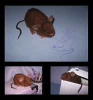 Mouse Plushie - Brown by Morumoto