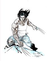 Wolverine august3rd 2013 carre senar by SpiderGuile