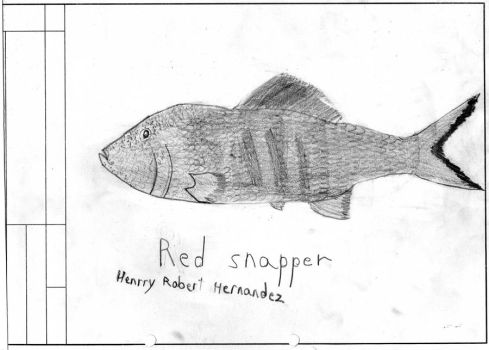 snapper or bass? by Henrry2012