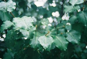 Wet Leaves by TheShortness28