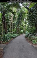Fairchild Botanical Gardens Stock 4 by Cassy-Blue
