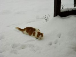Snow and my lovely cat by Georgya10