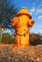 Yellow Fire Hydrant by DavidMCoyle