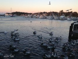 Port Stephens late noon by Zlata-Petal