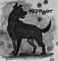Sirius Black as Padfoot by Magrat-me