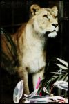 Lioness by Fordinand