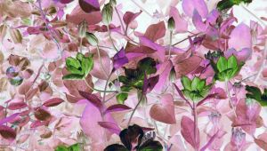 Different Clematis by PaulineMoss