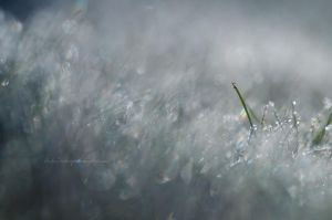 Morning Dew - Part II by Stridsberg