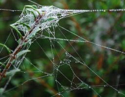 Puzzle Web by Forestina-Fotos