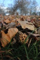 Oh How the Leaves Cover the Ground by erstucky
