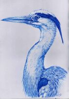 Grey heron in blue by Concini