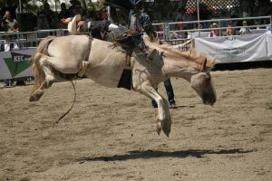 rodeo 5 by xbr0kendevotion