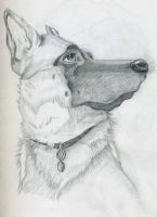 German shepherd sketche by blondewolf2