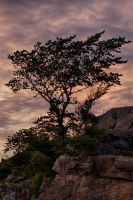 Tree at sunset by CharmingPhotography