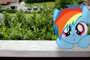 My little Dashie Wallpaper by StormXF3