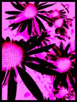 Pink Cone Flowers by padfoot-never-died