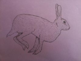 hare by SpasmodicSquirrel