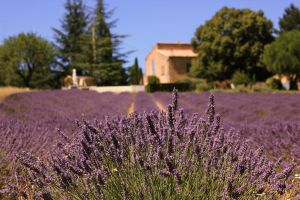 Lavender House by panna-cotta