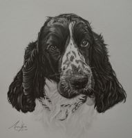 Commission - Cocker Spaniel 'Megan' by Captured-In-Pencil
