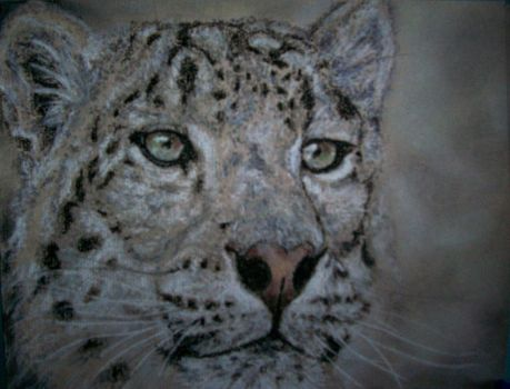Snow Leopard by Crystal-Owl