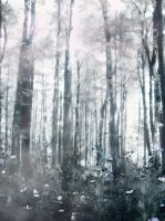 Foggy Forest by WanderingSoul-Stox