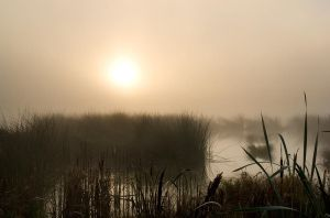 this morning II by indojo