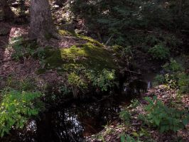 Forest Stock 5: Stream by HOTNStock