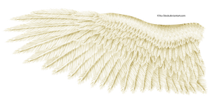 Cream Eagle Wing by K1ku-Stock
