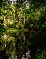 Forest Mirror by Toghar