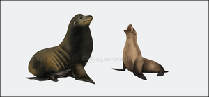 Galapagos Sea Lion by Nioell