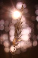 grain bokeh by Mulolemon